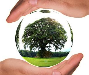 水晶に立派な木が写っている画像